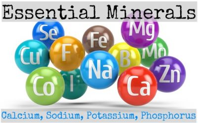 Essential Minerals: Calcium, Sodium, Potassium, and Phosphorus