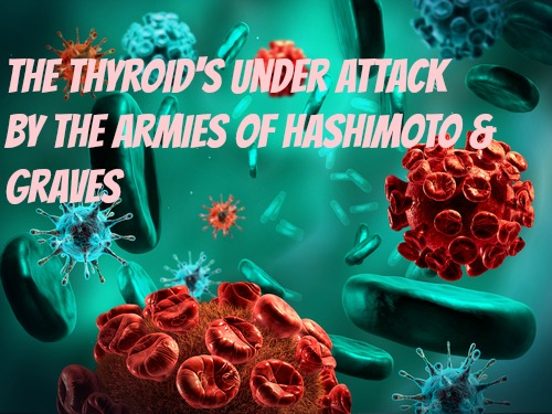 Autoimmune Disease VII (Attack on the thyroid -Hashimoto/Graves)
