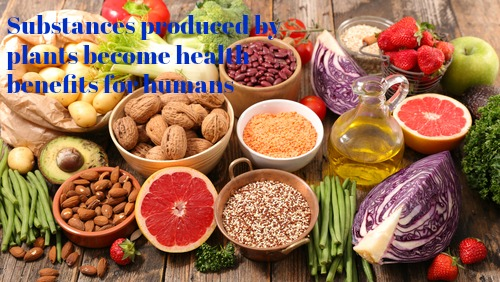 Nutrients in Food and their bodily purpose II (Lignans, Triterpenes, Phytosterols, Carotenoids and Fats)