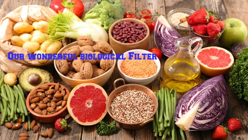 Nutrients in Food and their bodily purpose VI (Nutrients required for Liver Detox)