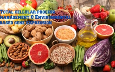 Nutrients in Food and their bodily purpose XV (Nutrients involved in Methylation I)