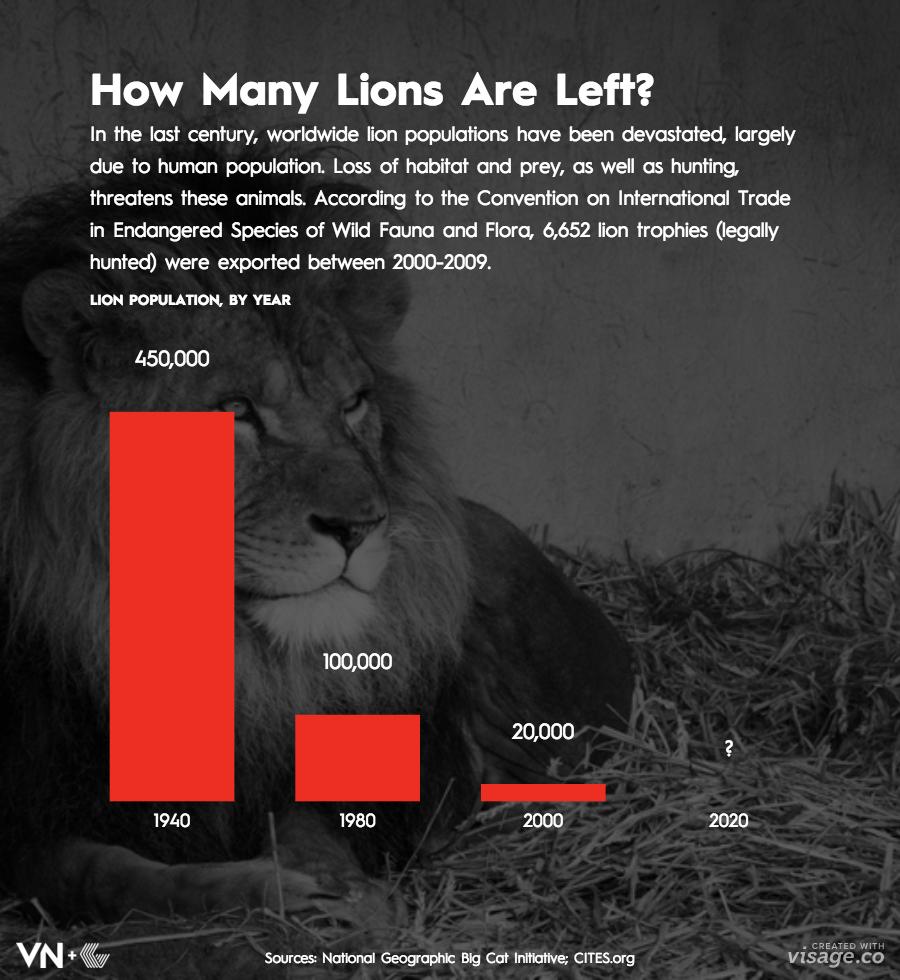VN Lion