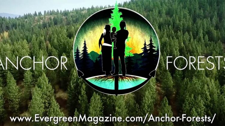 Anchor Forests