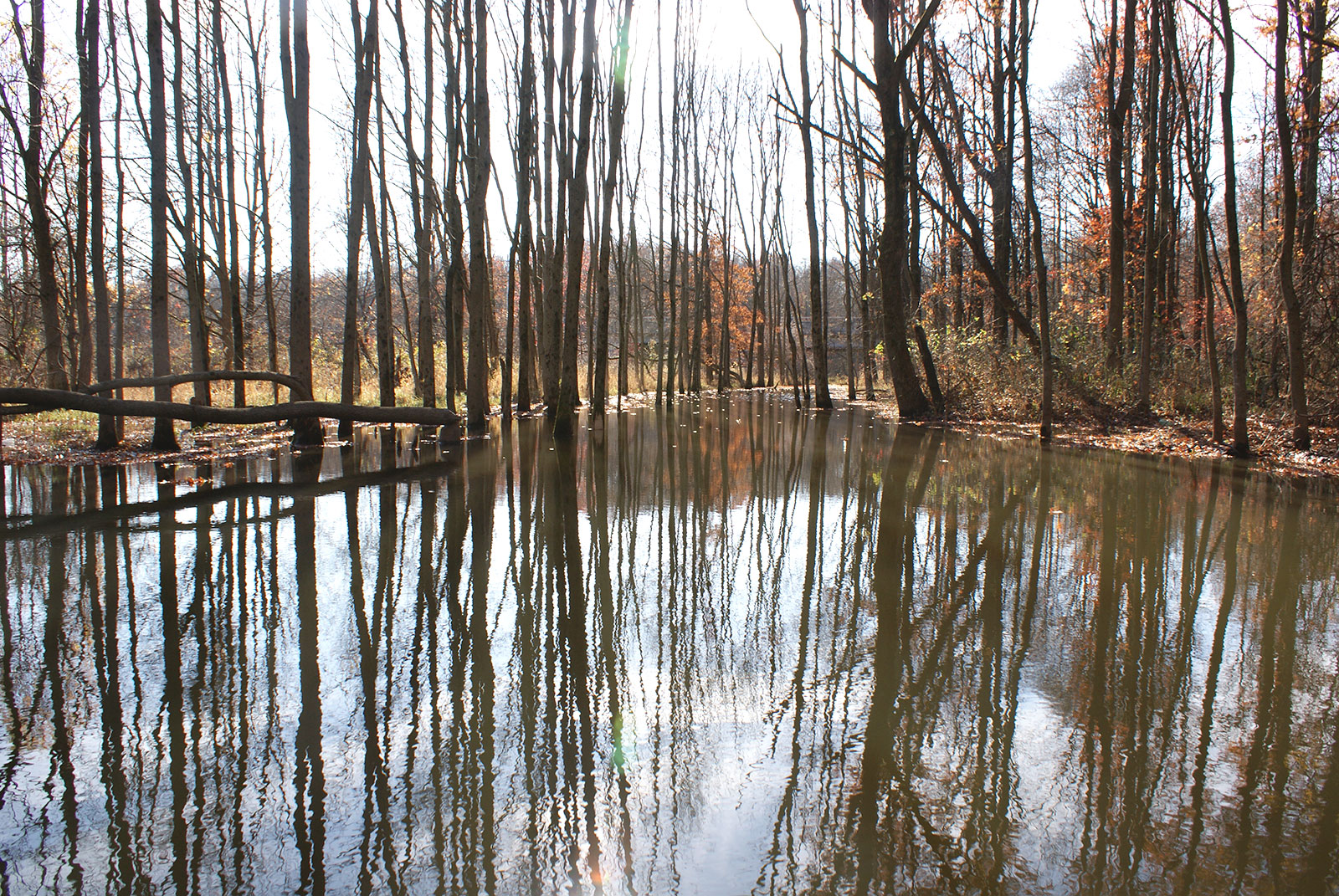 Dismal Swamp Conservation