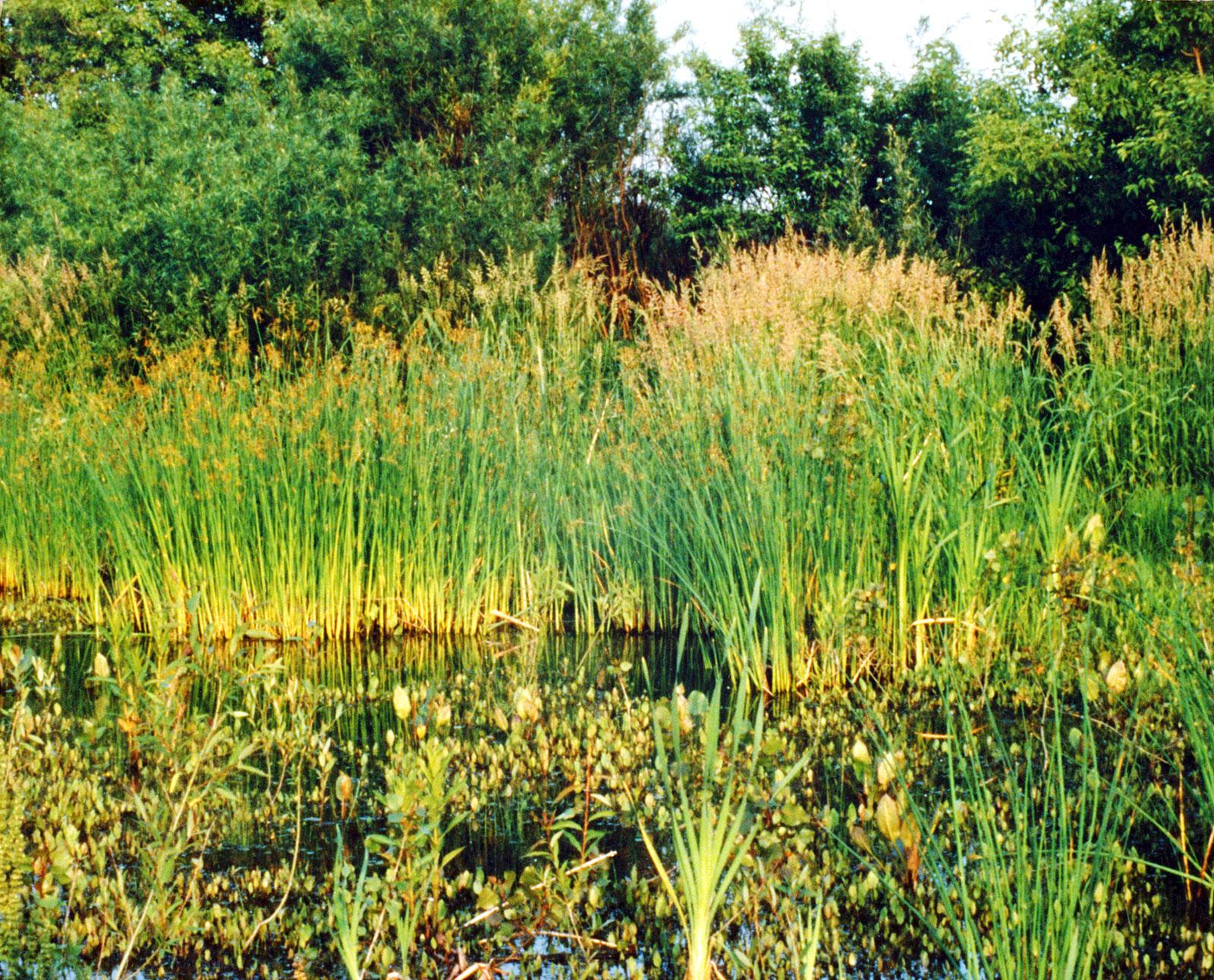 Otter Creek Wetland Bank
