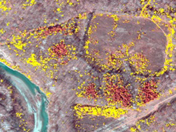Five Rivers Invasives