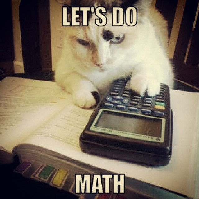 Image result for funny cat with maths