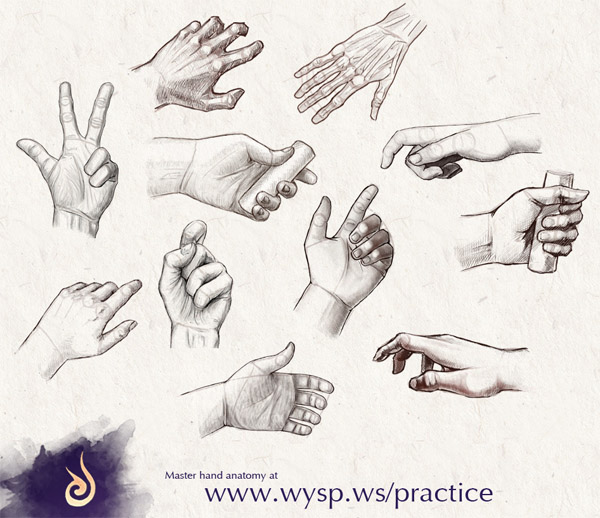 master hand anatomy the wysp learning engine by
