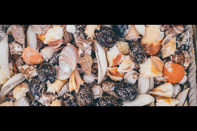 Croatia mussels.jpeg.moviebox