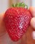 Thumbs_strawberry2