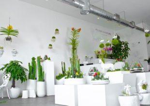 Kreativ bağçılıq. Paloma Teppa bitki aləmini müasir interyerdə qovuşdurur.