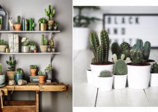 Kaktus motivləri. Ev interyerində yeni trend.