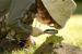 Biraz Serotonin Bloqu | Uğurlu insanların silahı maraq duyğusu