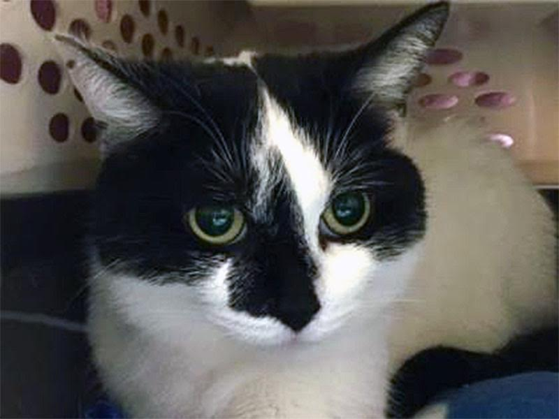 The New Classical FM Pet of the Week: Oreo featured image