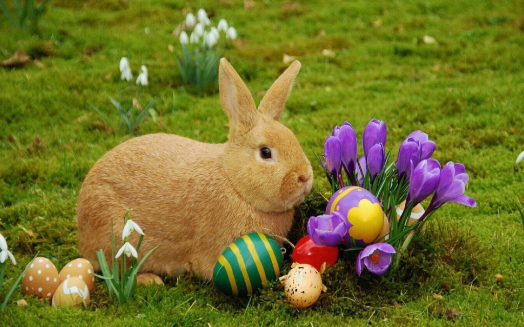 Wesleyville Village Preparing For Family Fun Easter Event featured image