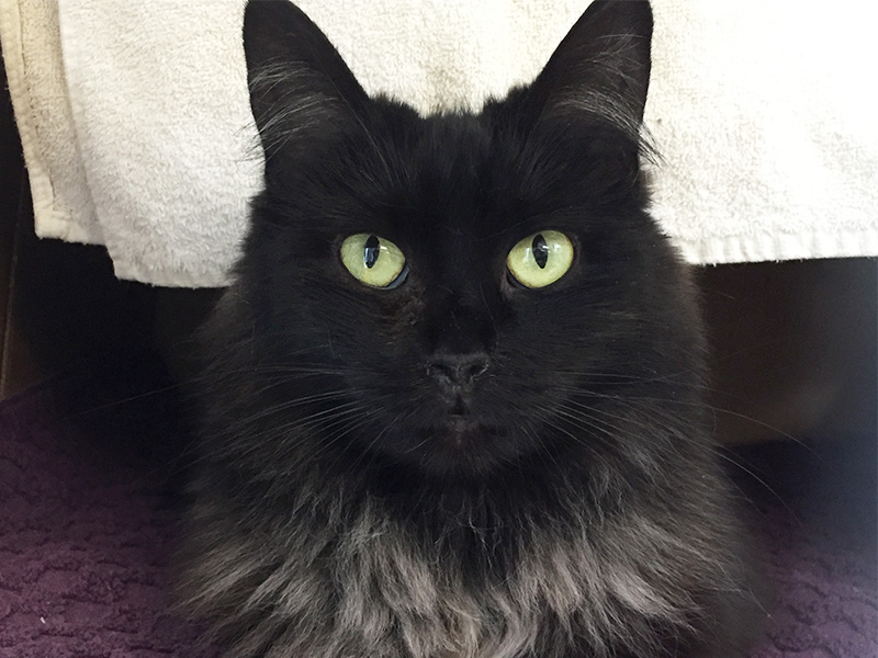 The New Classical FM Pet of the Week: Toothless featured image