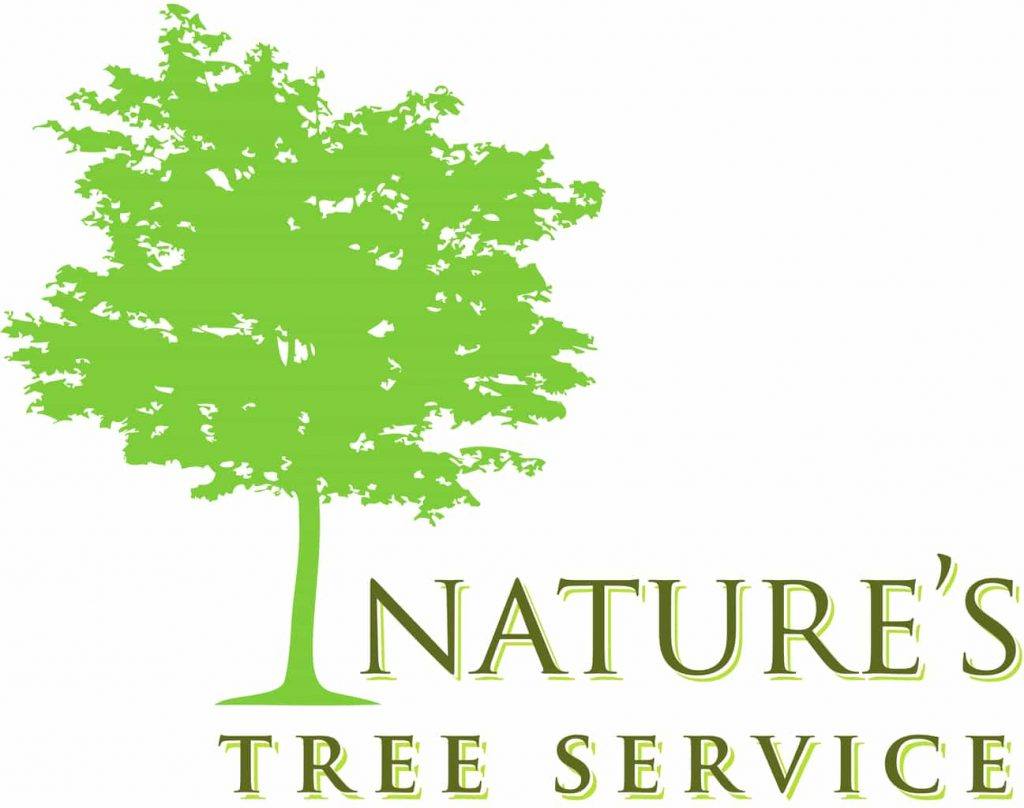 Tree Shaping And Pruning Is A True Art Form…Nature's Tree Service Team Of Artists Know This First Hand featured image