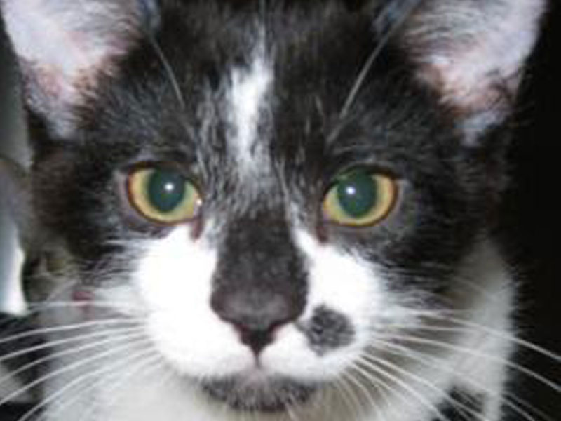 The New Classical FM Pet of the Week: Ainsley the 7-year-old male cat featured image