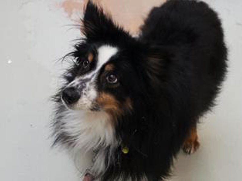 The New Classical FM Pet of the Week: Choco the 10-year-old female dog featured image