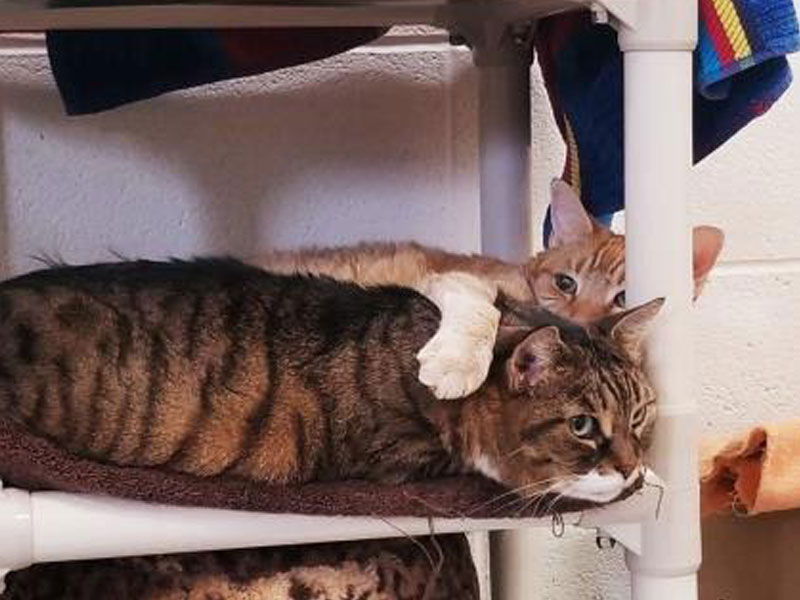 The New Classical FM Pet of the Week: Milo and Lyla the 10-year-old cats featured image