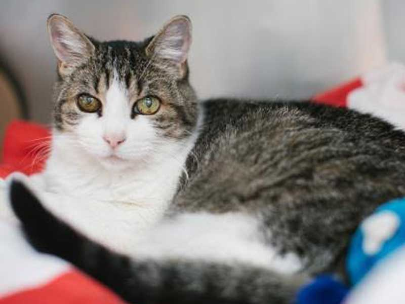 The New Classical FM Pet of the Week: Deloris the 12-year-old female cat featured image
