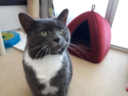 The New Classical FM Pet of the Week:  Chloe the 8-year-old cat