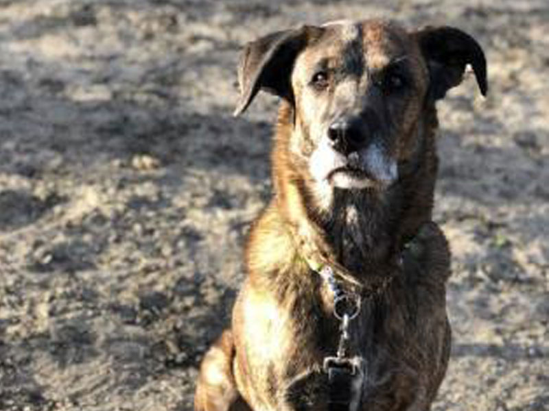 The New Classical FM Pet of the Week: 7-year-old Woody featured image