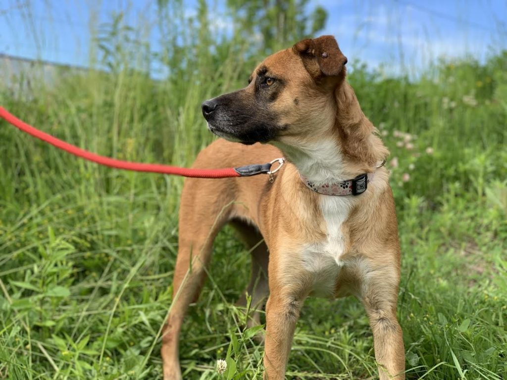 The New Classical FM Pet of the Week: 1-year-old Osaki featured image