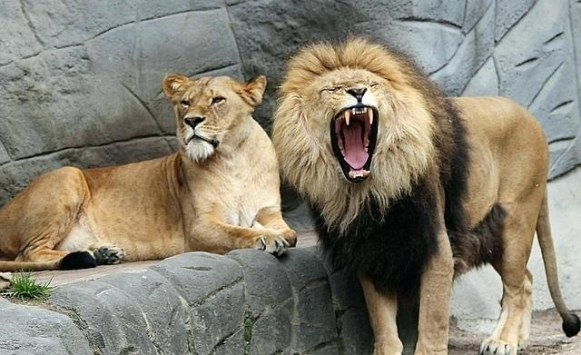 Need to be pumped up? In touch with your inner lion/ess? THIS is THE music for YOU. featured image