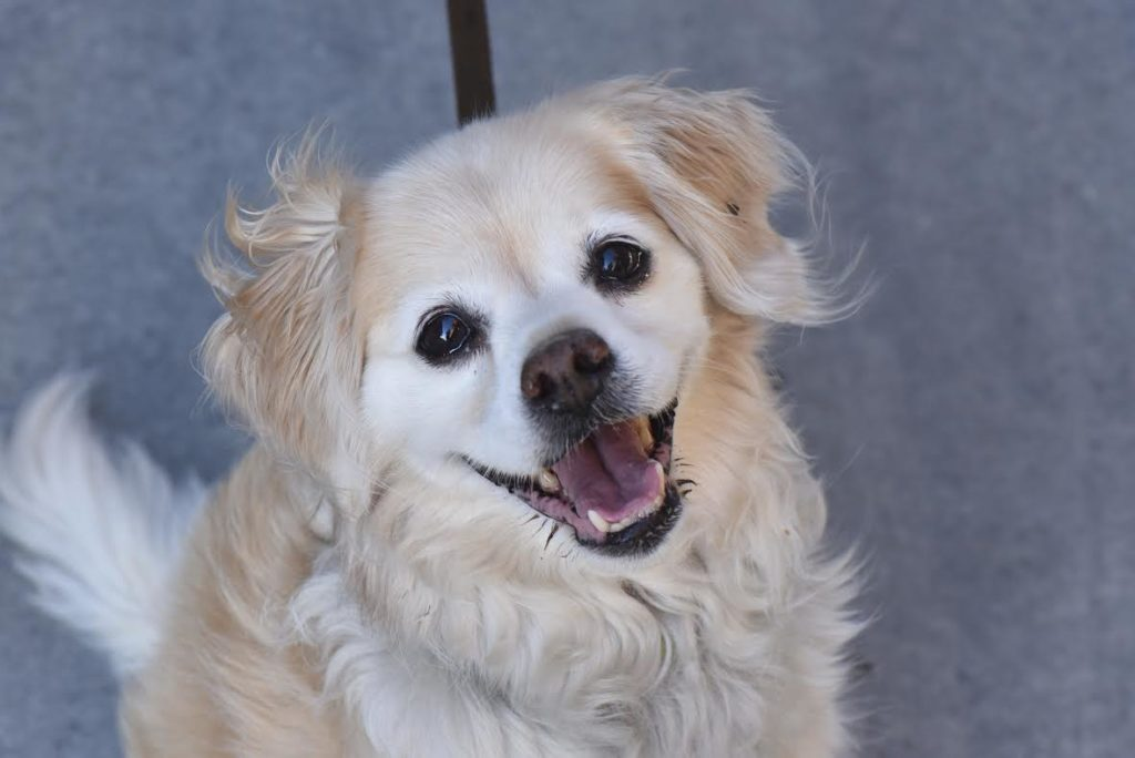 The New Classical FM Pet of the Week: 10-year-old Romie featured image