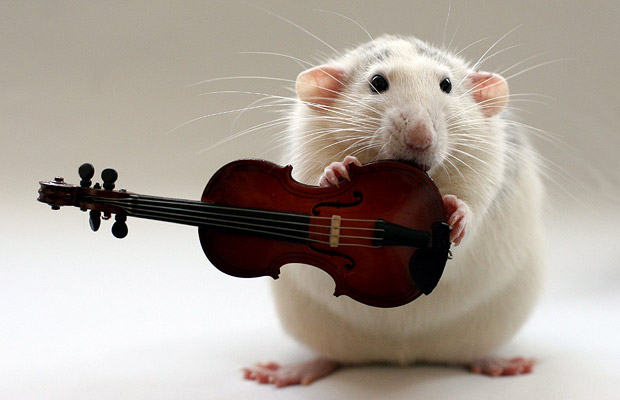 Which composers were Rats? Find out as we celebrate Chinese New Year featured image