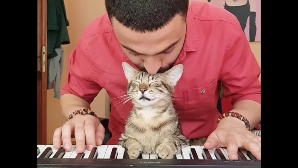Internet sensation Sarper Duman and his keyboard cat featured image