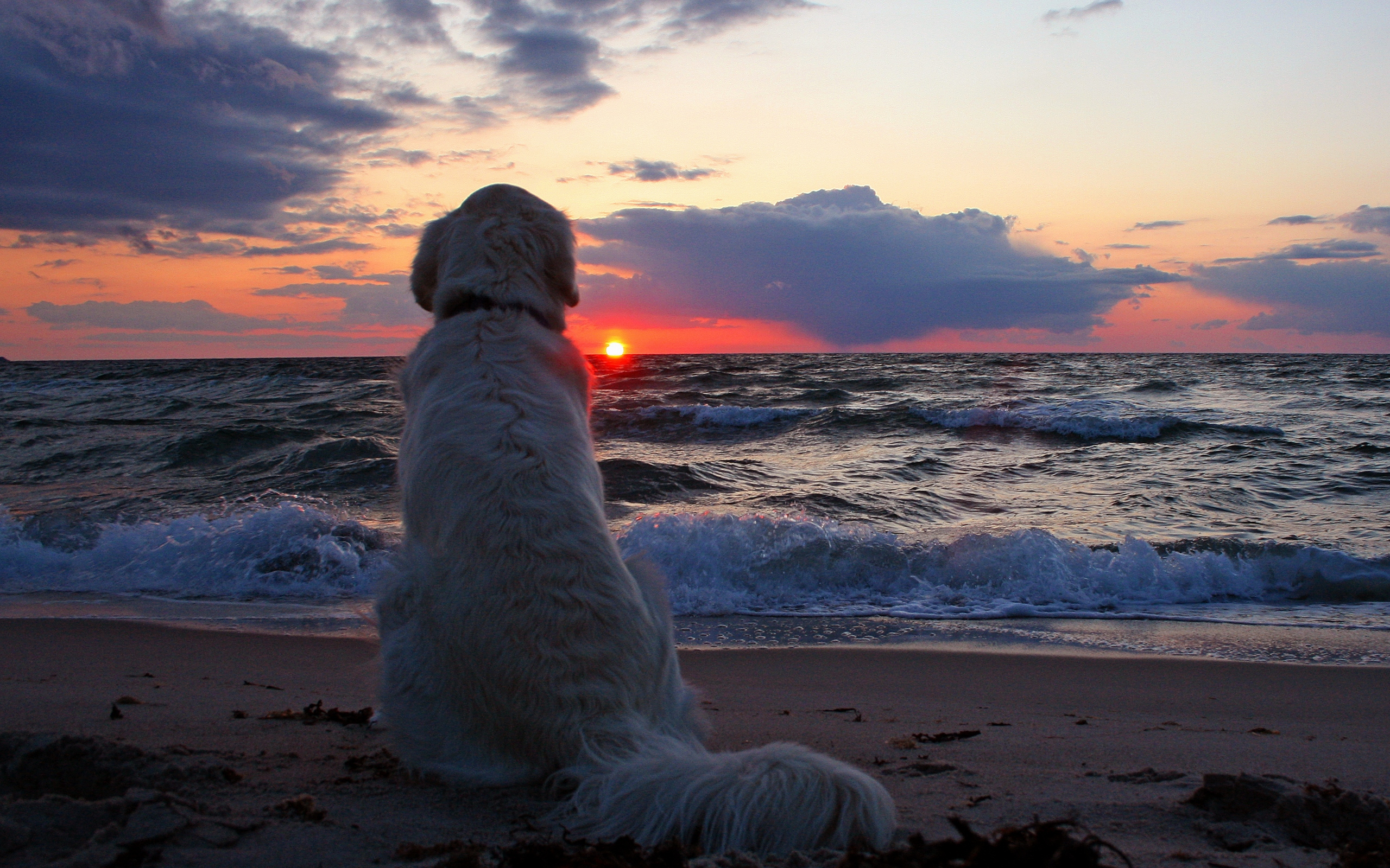 puppy watching sunset