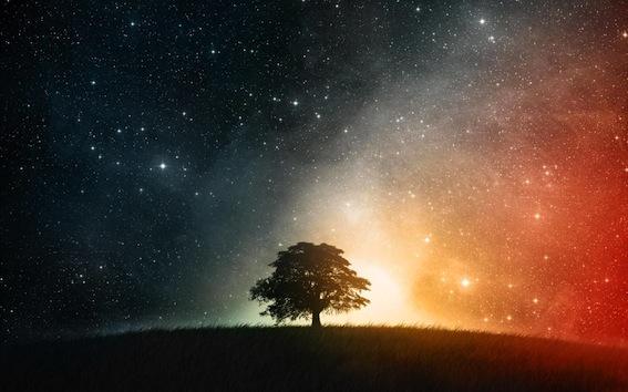 beautiful-starry-tree