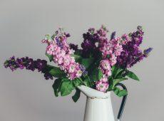 purplecanflower5_700x500