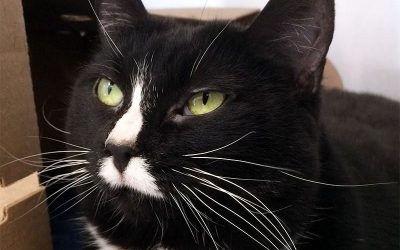 The New Classical FM Pet of the Week: Puss'n'Boots