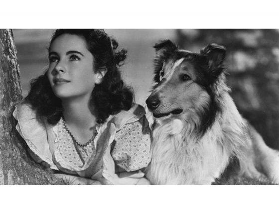 12 Most Famous Dogs From Movies And Tv Everything Zoomer