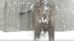 Elephant Snow in Oregon