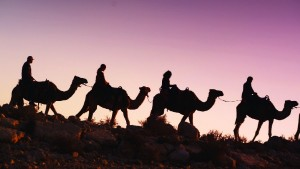 Journey to Christmas - Group on Camels Silhouette