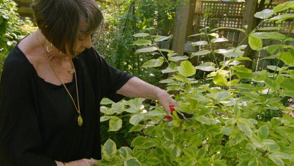 Ageless Gardens S1E1: Marjorie Harris