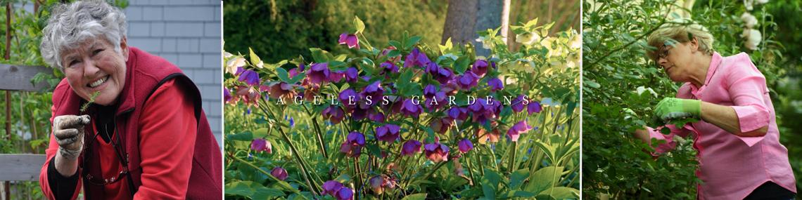 Ageless Gardens - Collage