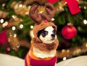 animal-aww-christmas-cute-deer-favim-com-329742