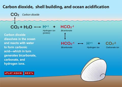 Ocean Acidification Experiment Assignments Educator Resource