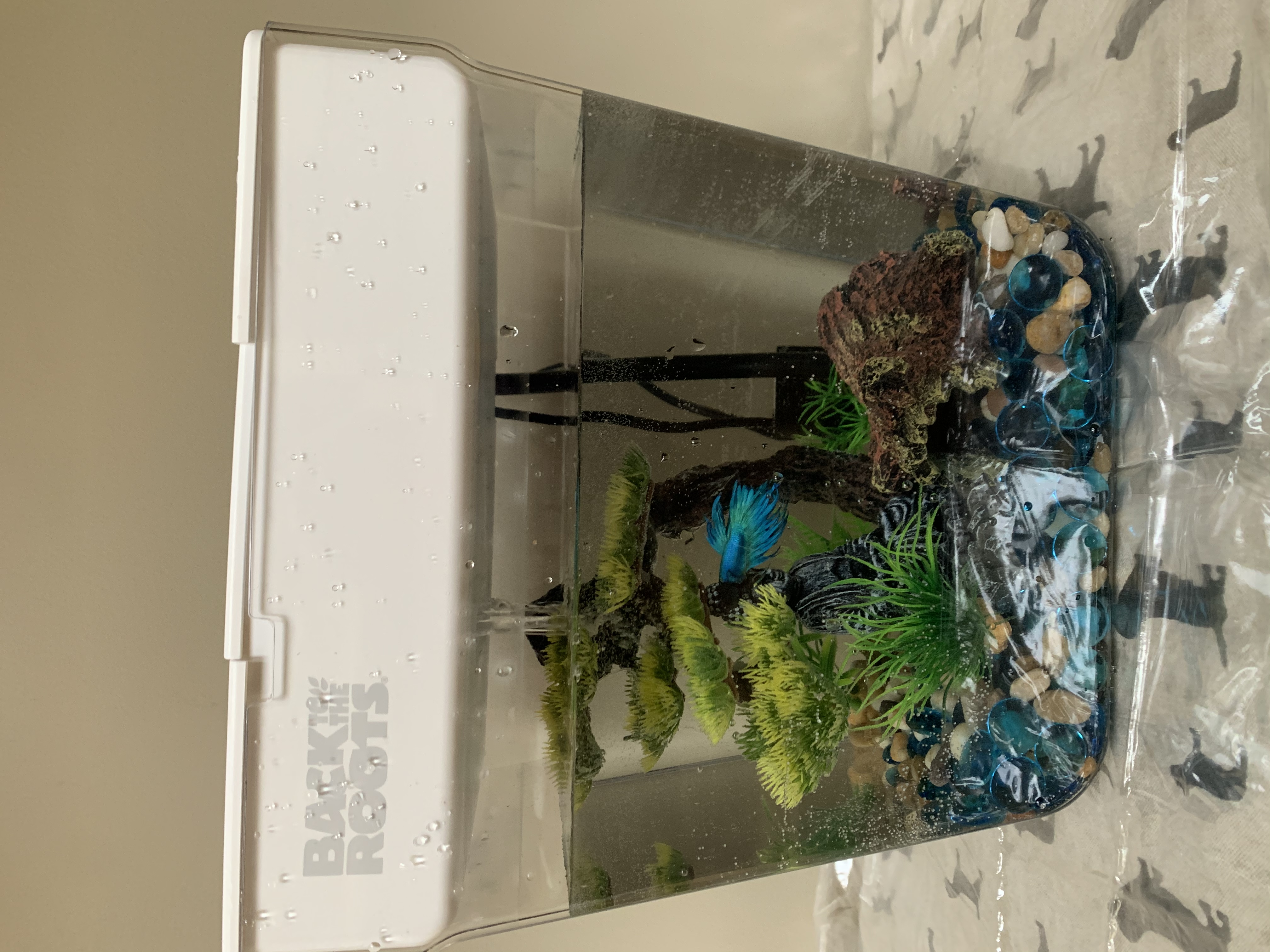 Aquaponics Successful Setup!