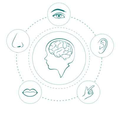 Change The Adult Brain Through Neurogenesis. Fresh Neurons, & Meditation