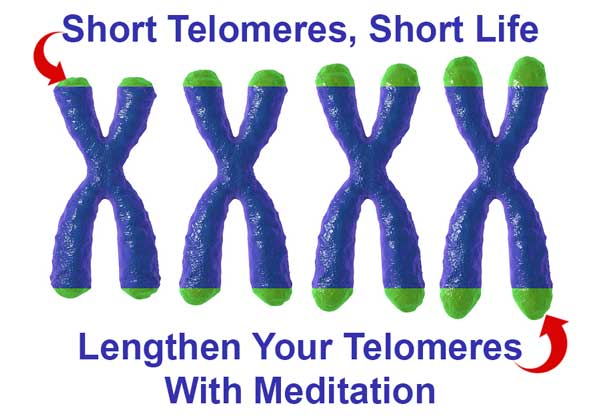 telomere shortening can lead to a short life, extend both with meditation