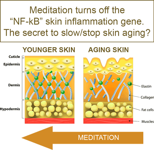 how the NF-κB skin gene stops wrinkles and sagging skin