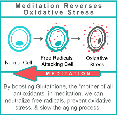 how to reverse oxidative stress and destroy free radicals