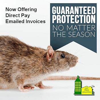 Offering Direct Pay Invoicing for Pest Control