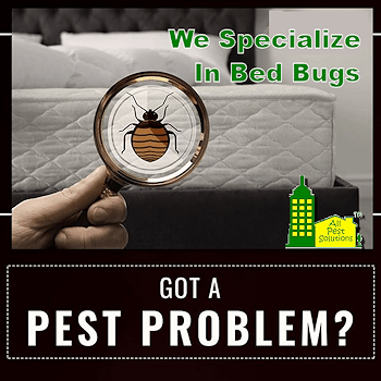 We Specialize in Bed Bugs